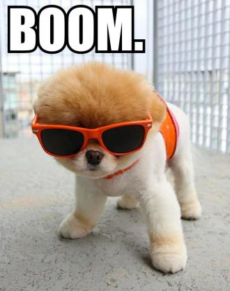 Boom Dog.jpg